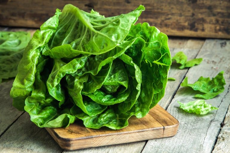 Lettuce Focus on the E-Coli Outbreak