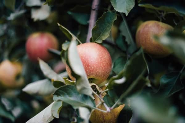 Apple-picking in Hudson Valley is a great fall escape from New York City.